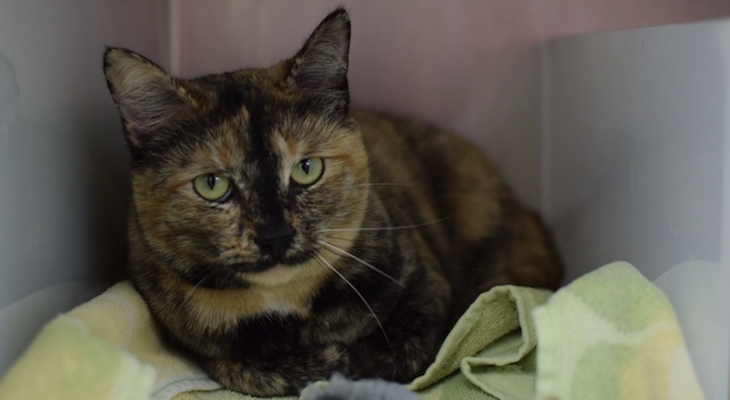 Cat of the Week: Oro