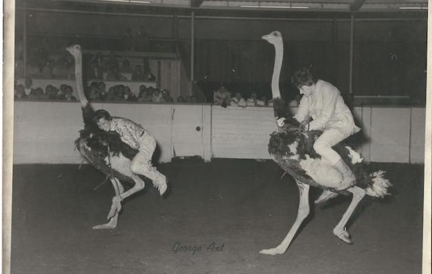 Ostrich Racing title=