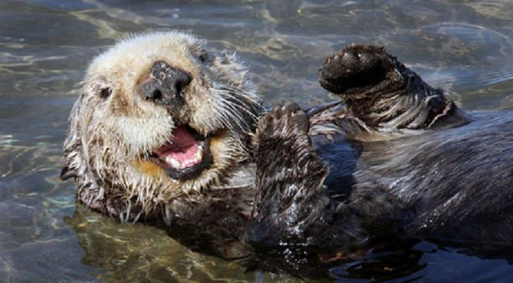 Otter Protections Upheld in Southern California title=