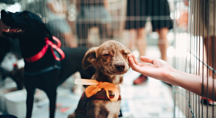 Clear the Shelters Pet Adoption Campaign