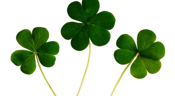 Celebrate the Luck of the Irish title=
