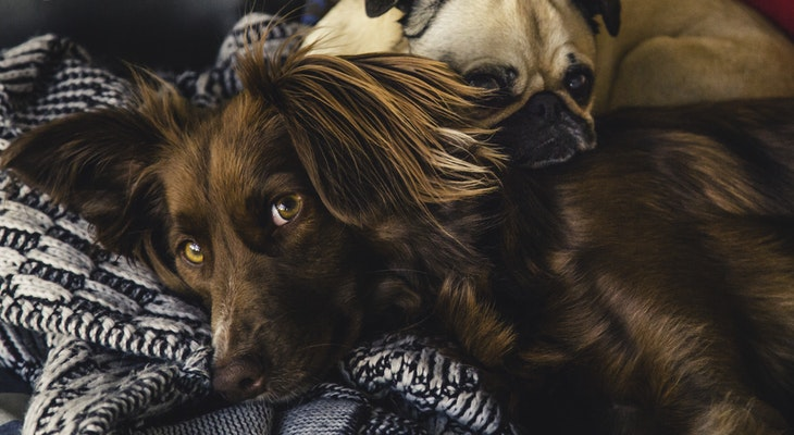 Health Precautions for Pet Owners title=