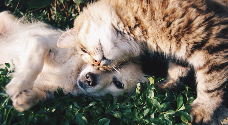 Pet Owners Urged To Vaccinate Pets Against Rabies