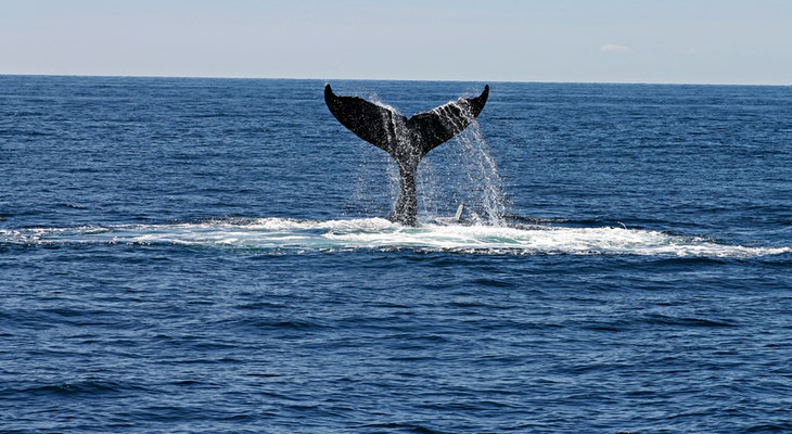 Results Released from 2018 Program to Protect Whales in the Channel title=