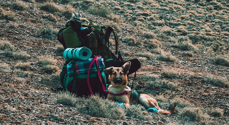 Hiking & Pet Safety Tips During a Heatwave