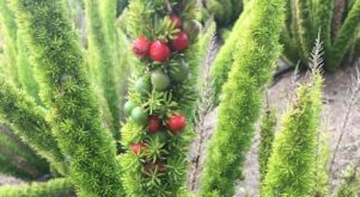 Plant/Fruit ID