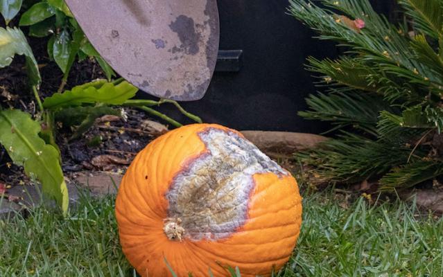 Compost Your Pumpkin title=