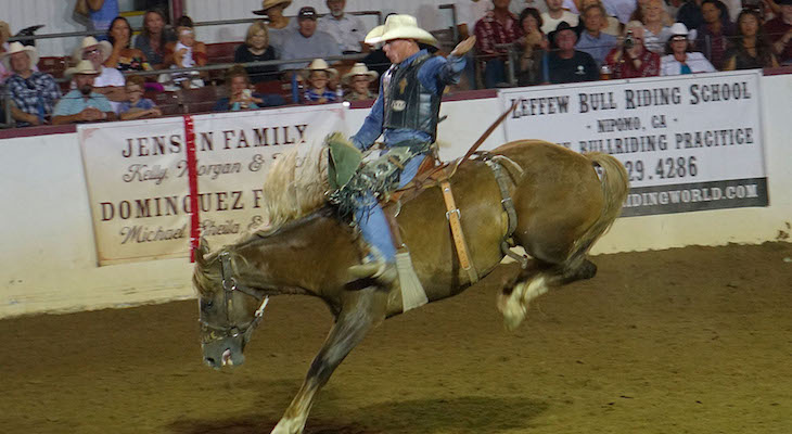 Fiesta Bull Riding/Rodeo Action!