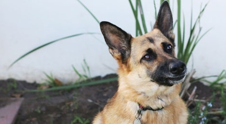 Dog of the Week: Sasha title=