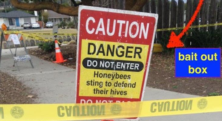 Saving Honeybees title=