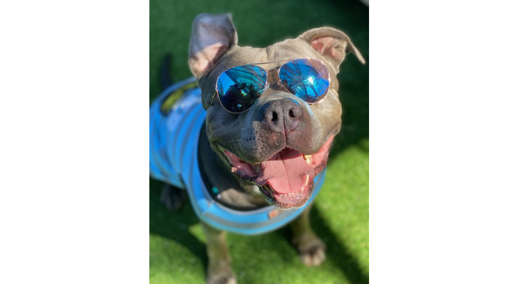Heat Advisory for Pets