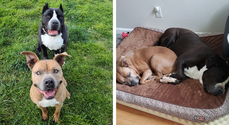 Santa Barbara Humane finds new home for Deaf Dog and Bonded Companion