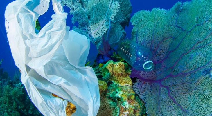 Sea Center Celebrates World Ocean's Day