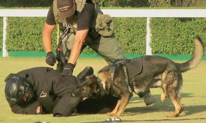 SBPD K9 Loki to Receive Mayoral Proclamation