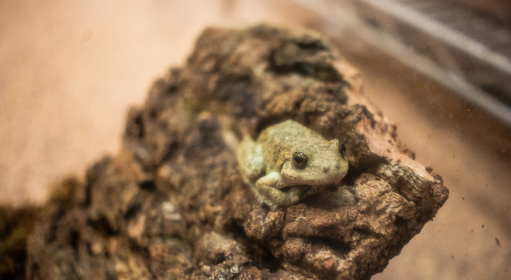 Wildlife Rescue Treats 80 Frogs Affected by Toro Creek Oil Seepage