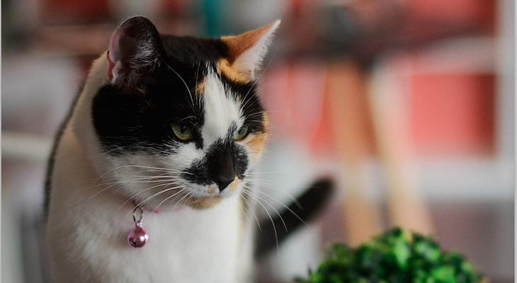 Cat of the Week: Queen