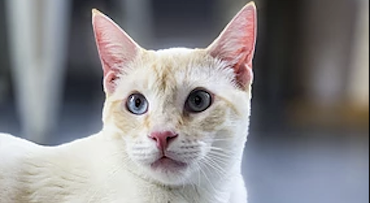 Cat of the Week: Valentine title=