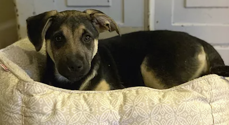 Dog of the Week: Sage