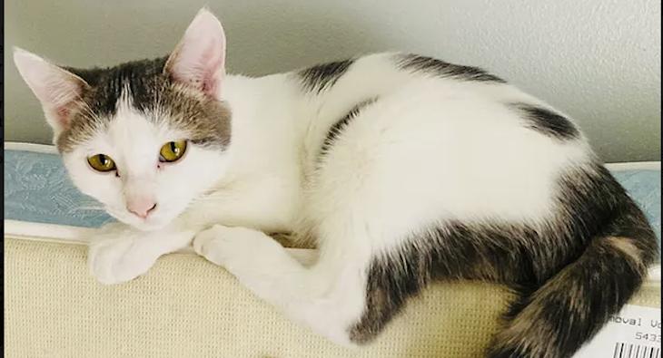 Cat of the Week: Teya title=
