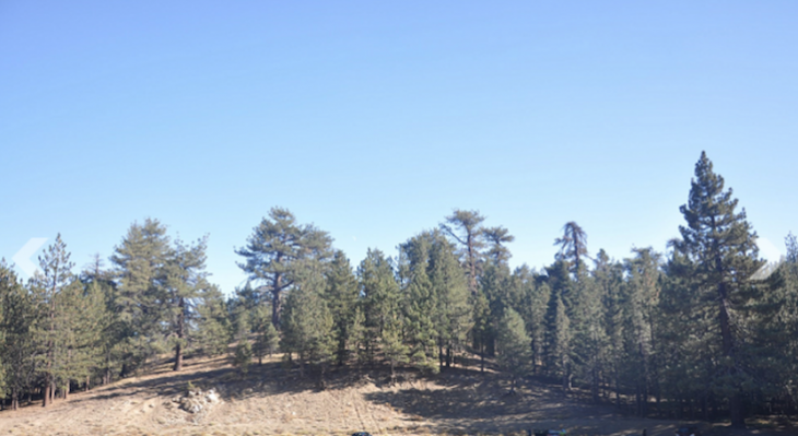 Public comments on Mount Pinos Forest Health and Fuels Reduction Project open through May 7 title=