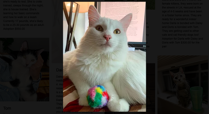Cat of the Week: Daisy title=
