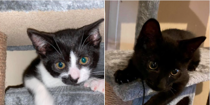 Cats of the Week: Sally and Stanley