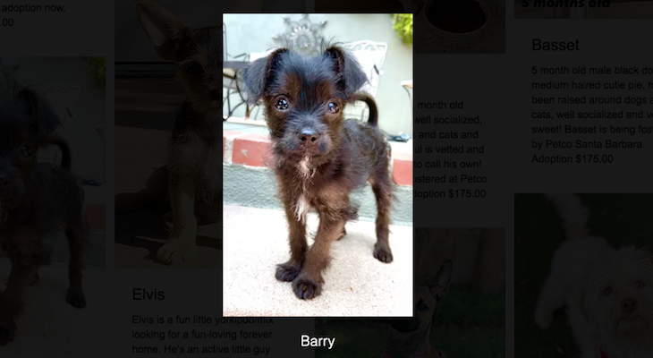 Dog of the Week: Barry