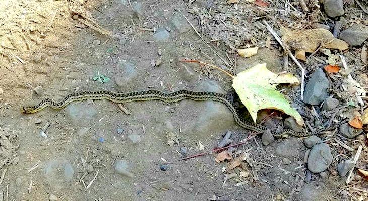 Snake I.D. title=