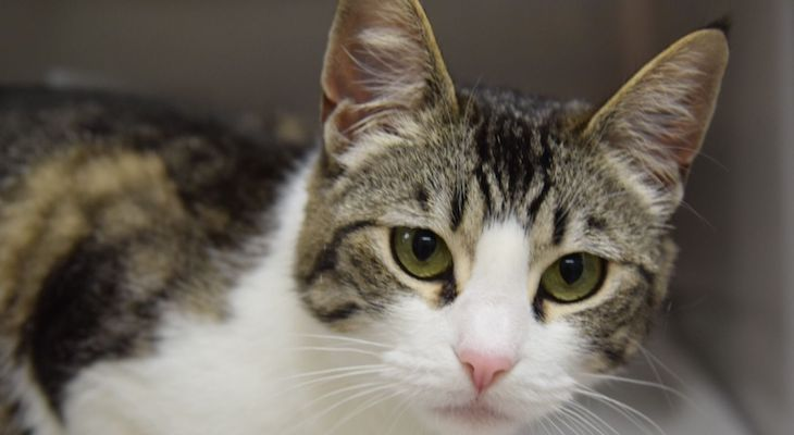 Cat of the Week: Stevie title=
