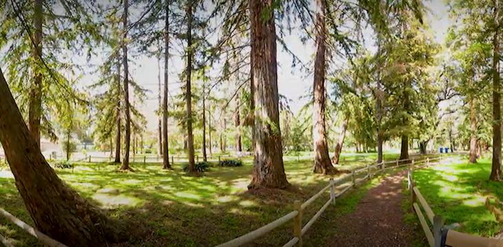 Stow Grove Park Tree Maintenance Begins Thursday title=