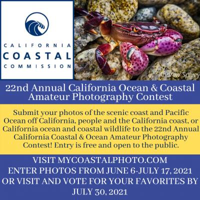photo contest flier title=