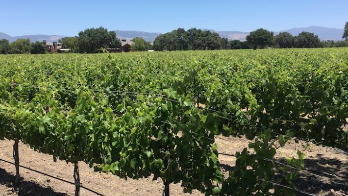 Santa Ynez Valley Leaders Look to Improve Local Economy