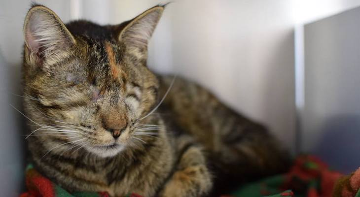 Cat of the Week: Tabitha