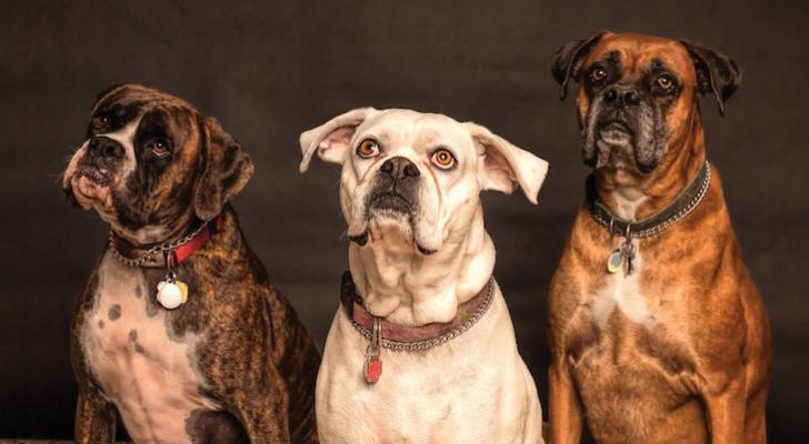 County Animal Services Temporarily Modified