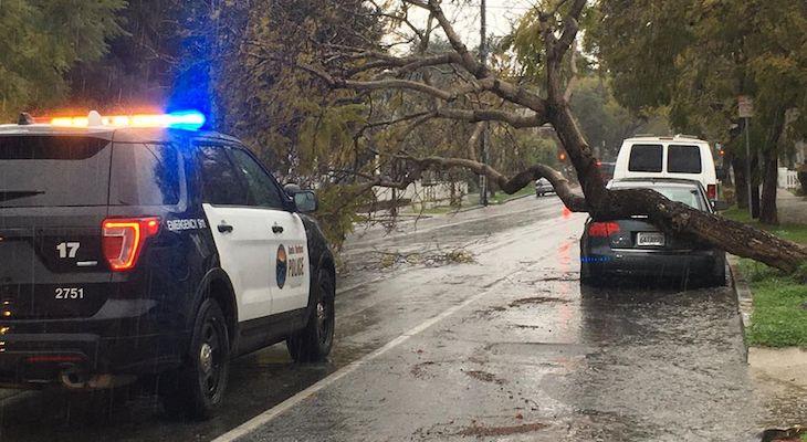 Tree Falls on Vehicle on Bath Street