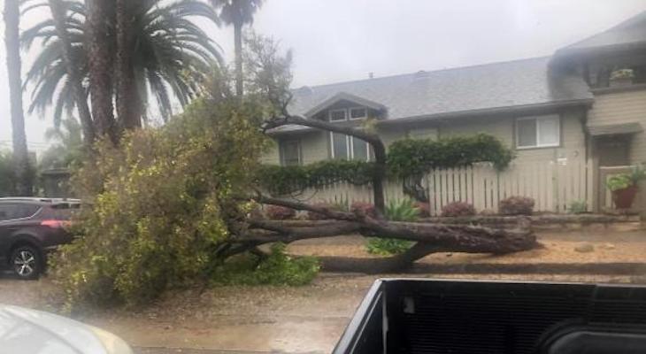Tree Down on Los Olivos title=