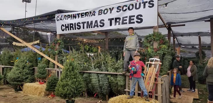 Carpinteria Boy Scouts Christmas Tree Lot Opens Saturday title=