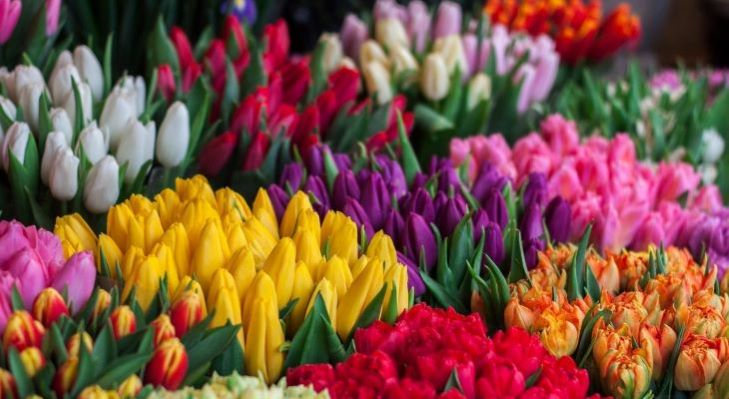 Bipartisan Resolution Supporting American Flower Industry Introduced