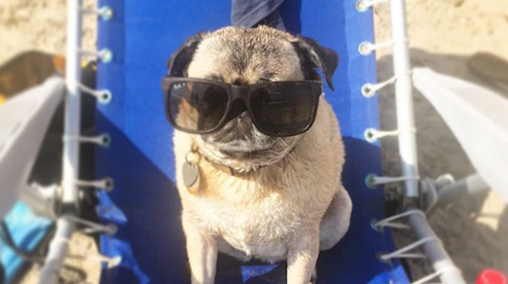 Dog of the Week: Tyler Durden the Pug title=