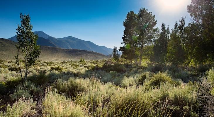 Valentine Eastern Sierra Reserves Receive Grant