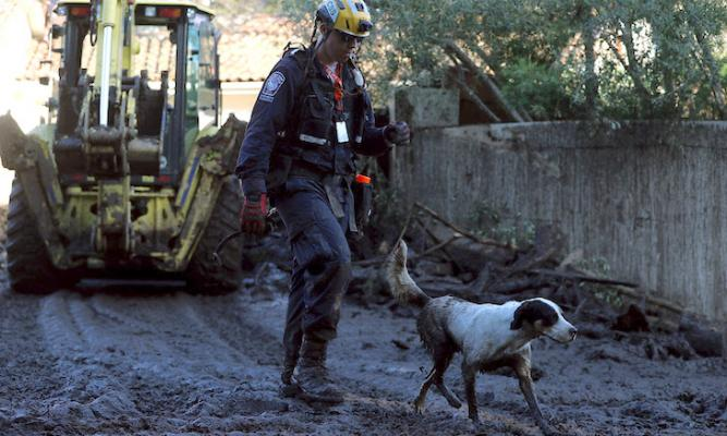 The Rescue Dogs of the Montecito Mudslides