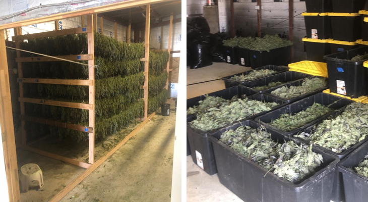 Illegal Cannabis Seized from Coastline Site Near Goleta