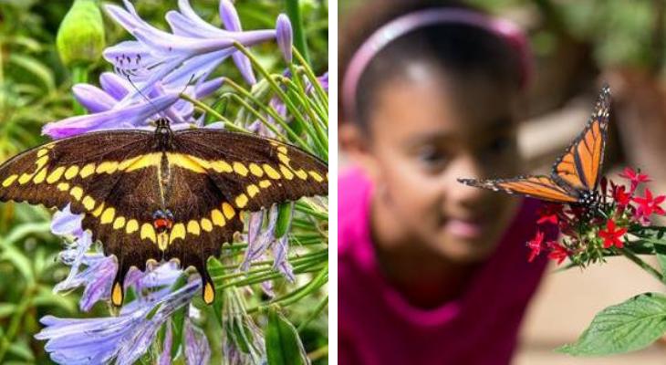 Museum of Natural History Seeks Butterfly Pavilion Volunteers title=