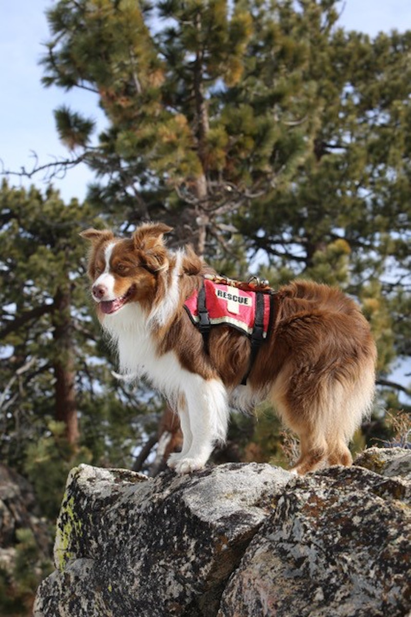 Search and Rescue K-9 MacGyver title=