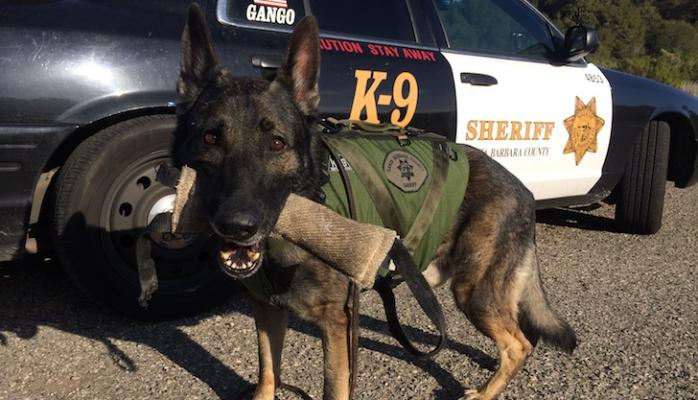 Sheriff's Benevolent Posse Launches Project Deputy Dog title=