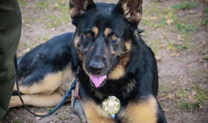 Dog of the Week: Deputy Duke title=