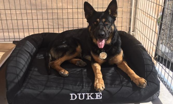 Sheriff's K-9 Unit Receives Grant Funding Thanks to Votes title=