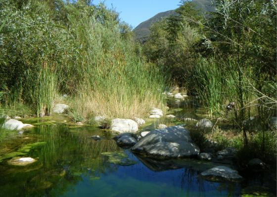 Settlement Agreement Helps Restore Flows to the Ventura River