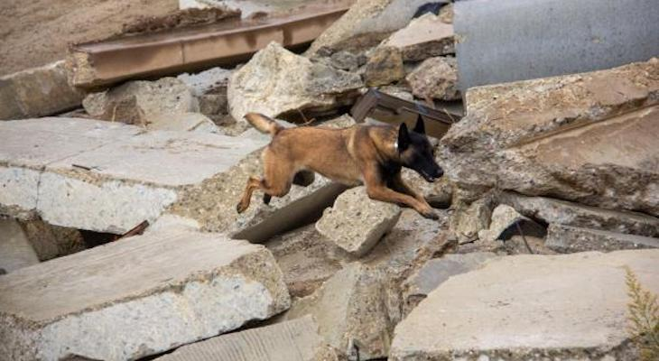 Local Stray Dog Gets New Life as Disaster Search Team