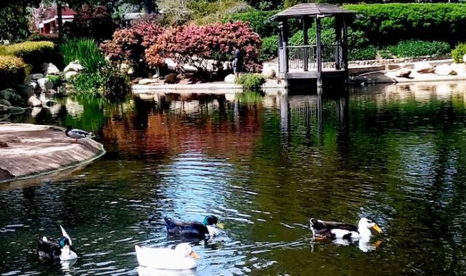 Alice Keck Park Views title=